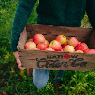 Batlow Cider apples
